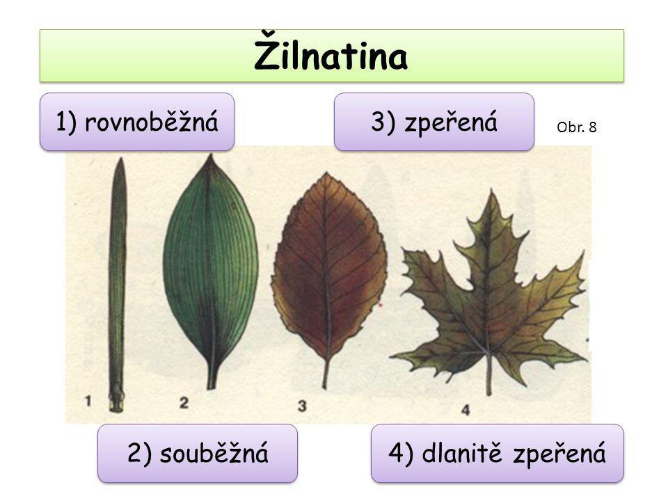 Žilnatina 1) rovnoběžná 3) zpeřená 2) souběžná 4) dlanitě zpeřená Obr. 8