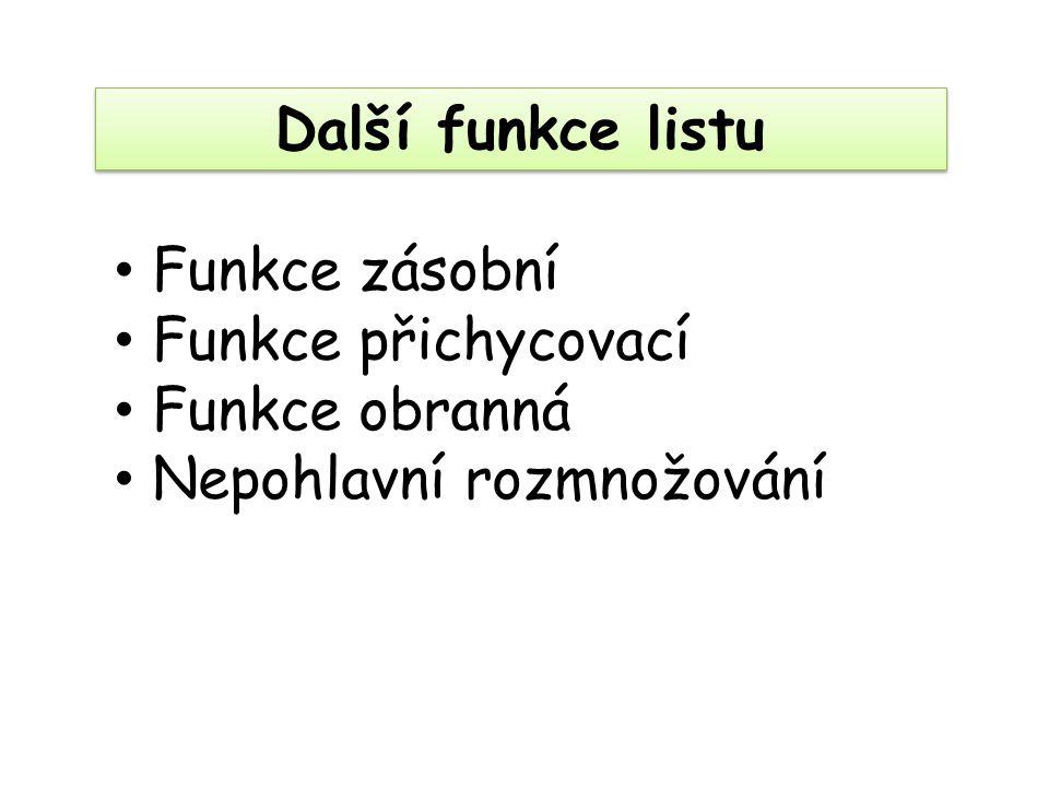 Další funkce listu Funkce zásobní Funkce přichycovací Funkce obranná Nepohlavní rozmnožování