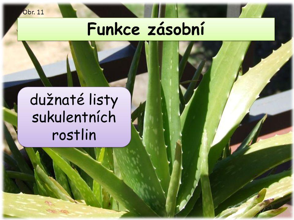 Funkce zásobní dužnaté listy sukulentních rostlin Obr. 11
