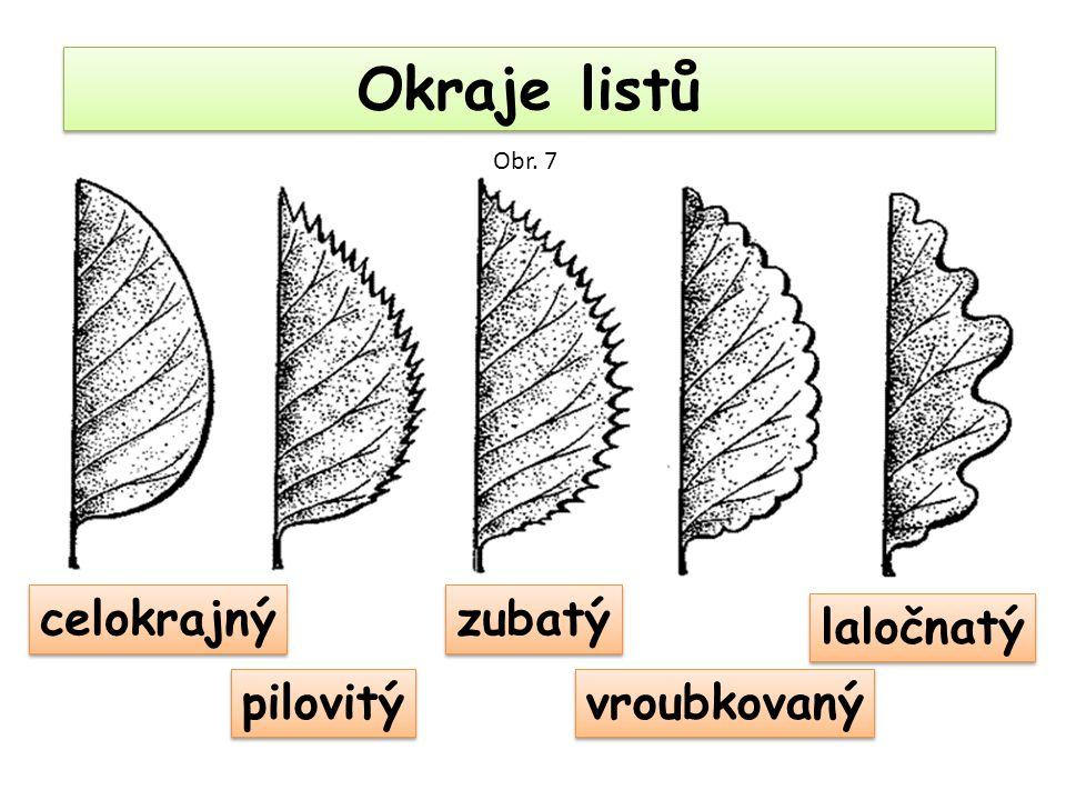 Okraje listů celokrajný pilovitý zubatý laločnatý vroubkovaný Obr. 7