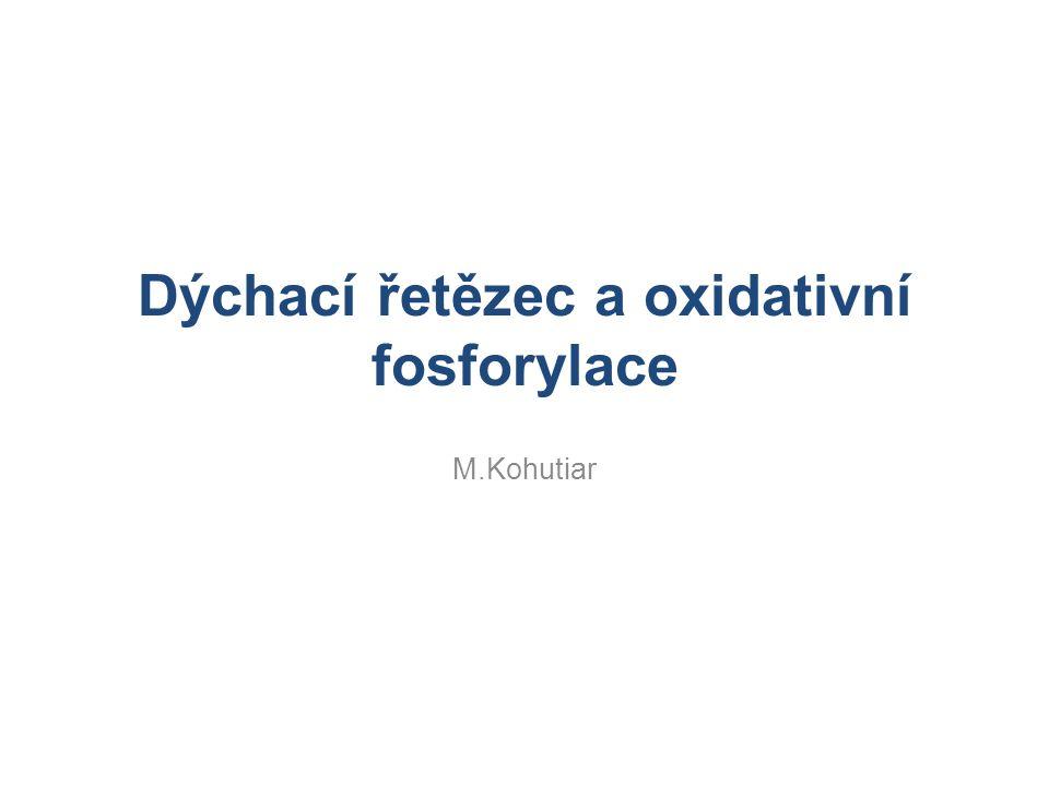 Dýchací řetězec a oxidativní fosforylace M.Kohutiar