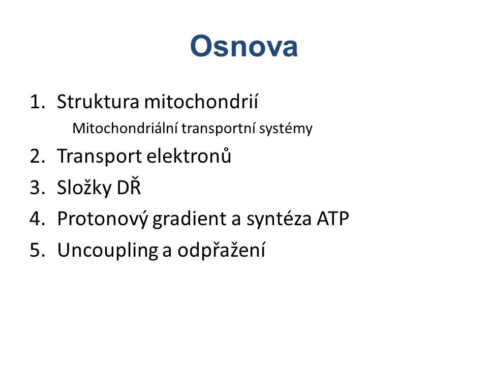 Osnova 1.Struktura mitochondrií Mitochondriální transportní systémy 2.Transport elektronů 3.Složky DŘ 4.Protonový gradient a syntéza ATP 5.Uncoupling
