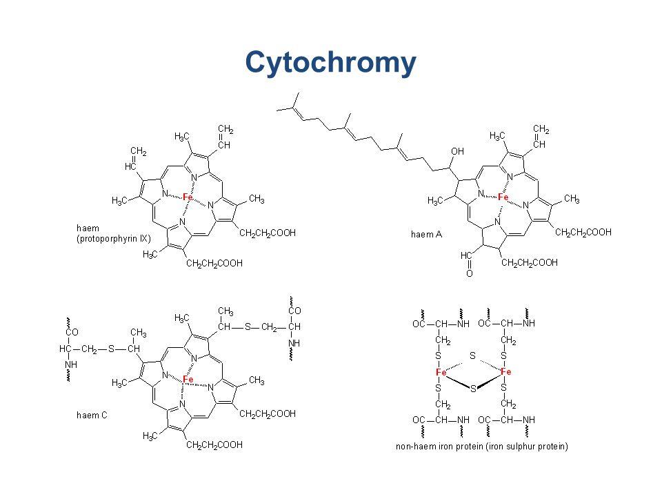 Cytochromy