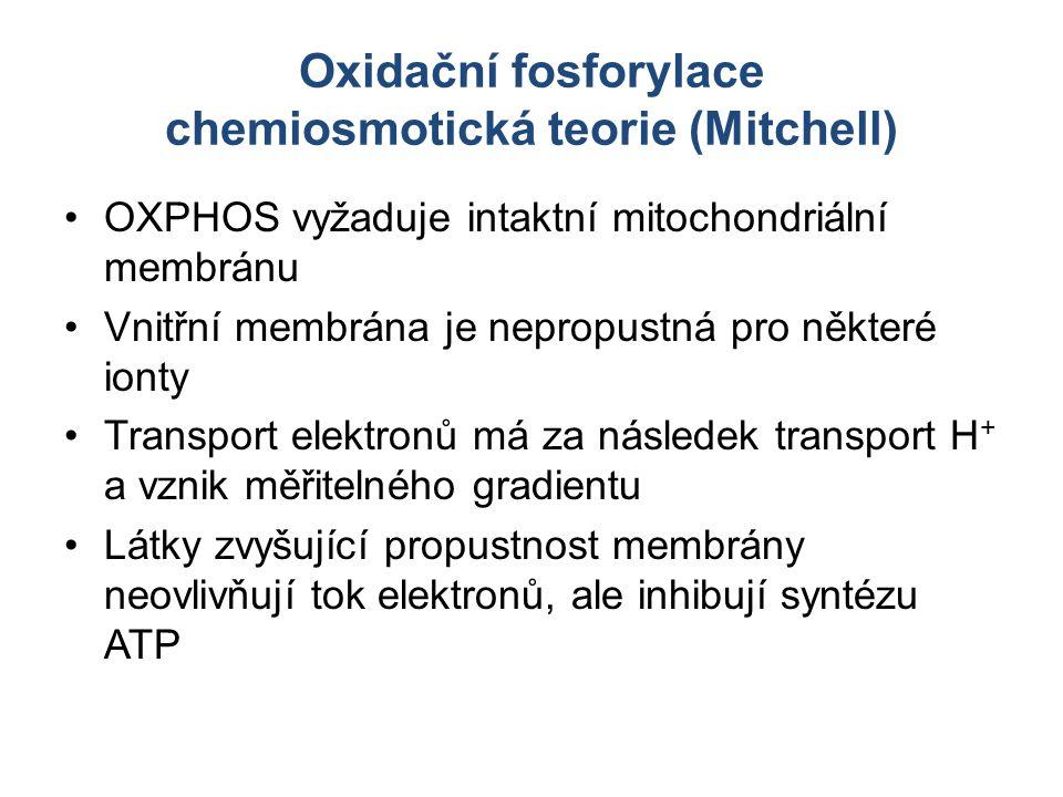 Oxidační fosforylace chemiosmotická teorie (Mitchell) OXPHOS vyžaduje intaktní mitochondriální membránu Vnitřní membrána je nepropustná pro některé io