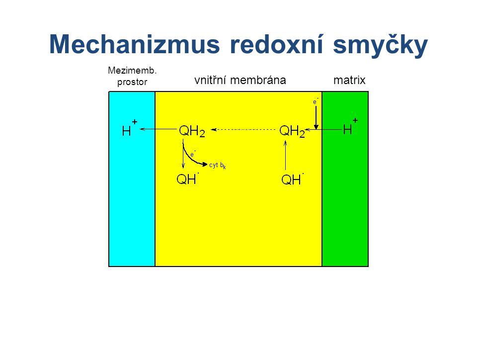 Mechanizmus redoxní smyčky matrixvnitřní membrána Mezimemb. prostor