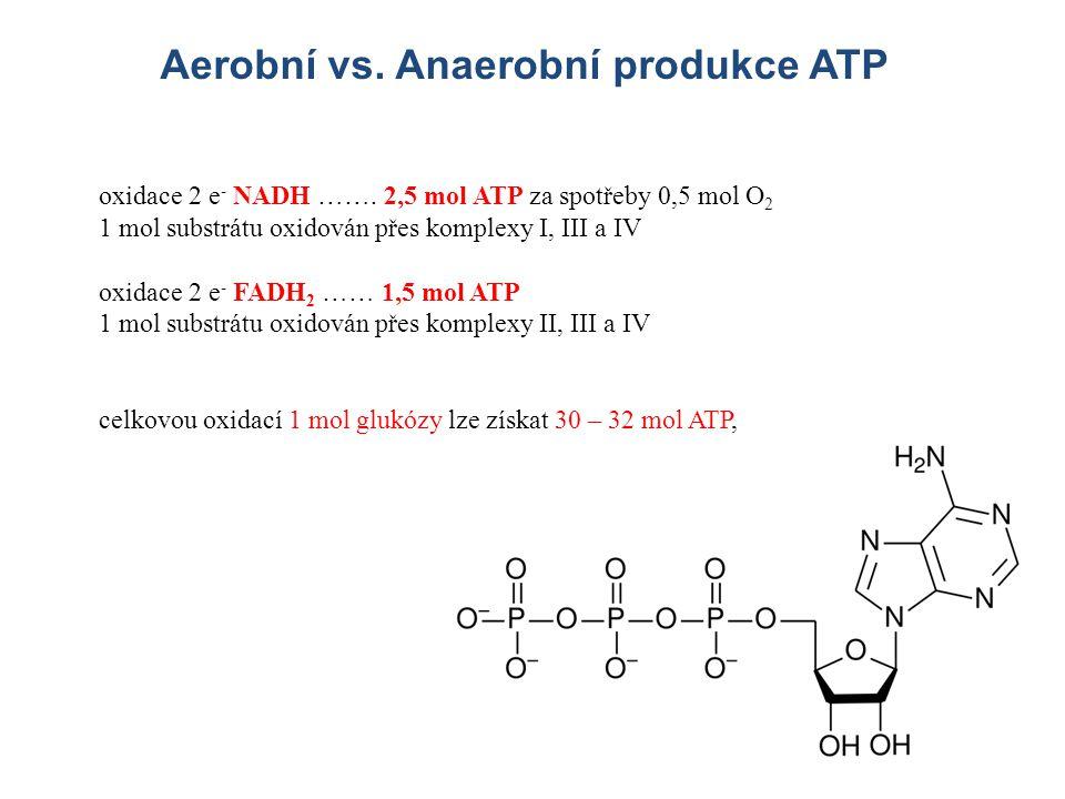 Aerobní vs. Anaerobní produkce ATP oxidace 2 e - NADH ……. 2,5 mol ATP za spotřeby 0,5 mol O 2 1 mol substrátu oxidován přes komplexy I, III a IV oxida