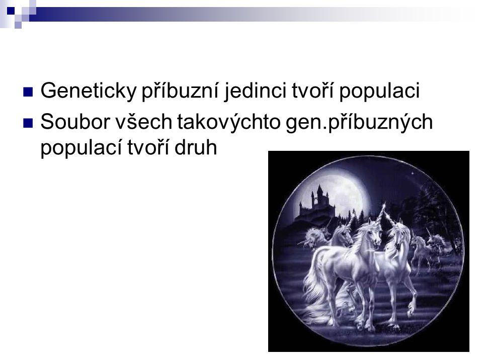 Geneticky příbuzní jedinci tvoří populaci Soubor všech takovýchto gen.příbuzných populací tvoří druh
