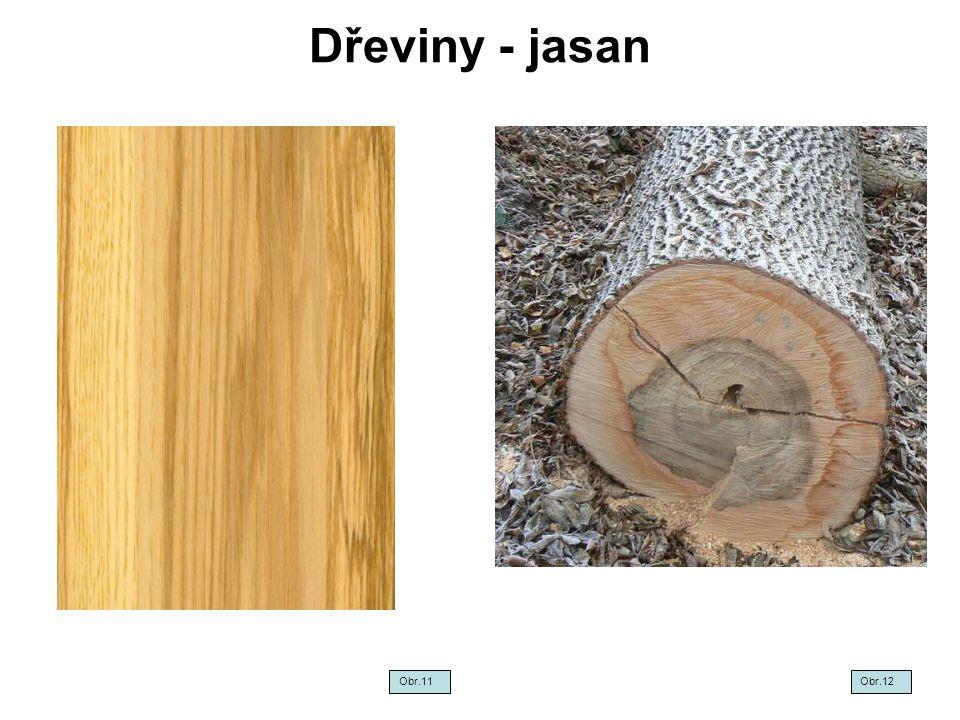 Dřeviny - jasan Obr.11Obr.12