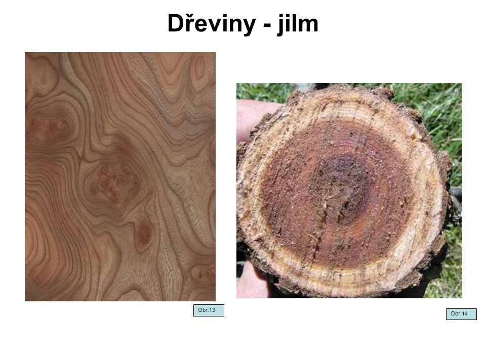 Dřeviny - jilm Obr.13 Obr.14