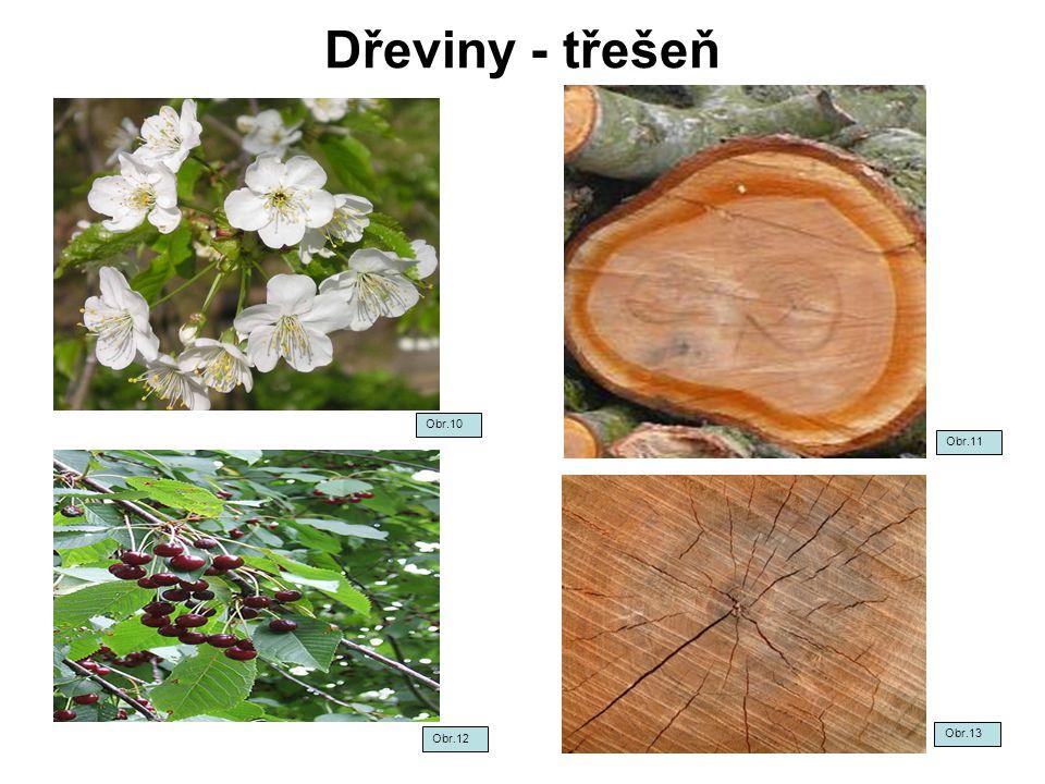 Dřeviny - třešeň Obr.12 Obr.13 Obr.10 Obr.11
