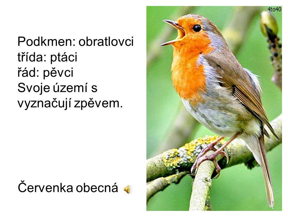 Podkmen: obratlovci třída: ptáci řád: pěvci Svoje území s vyznačují zpěvem. Červenka obecná