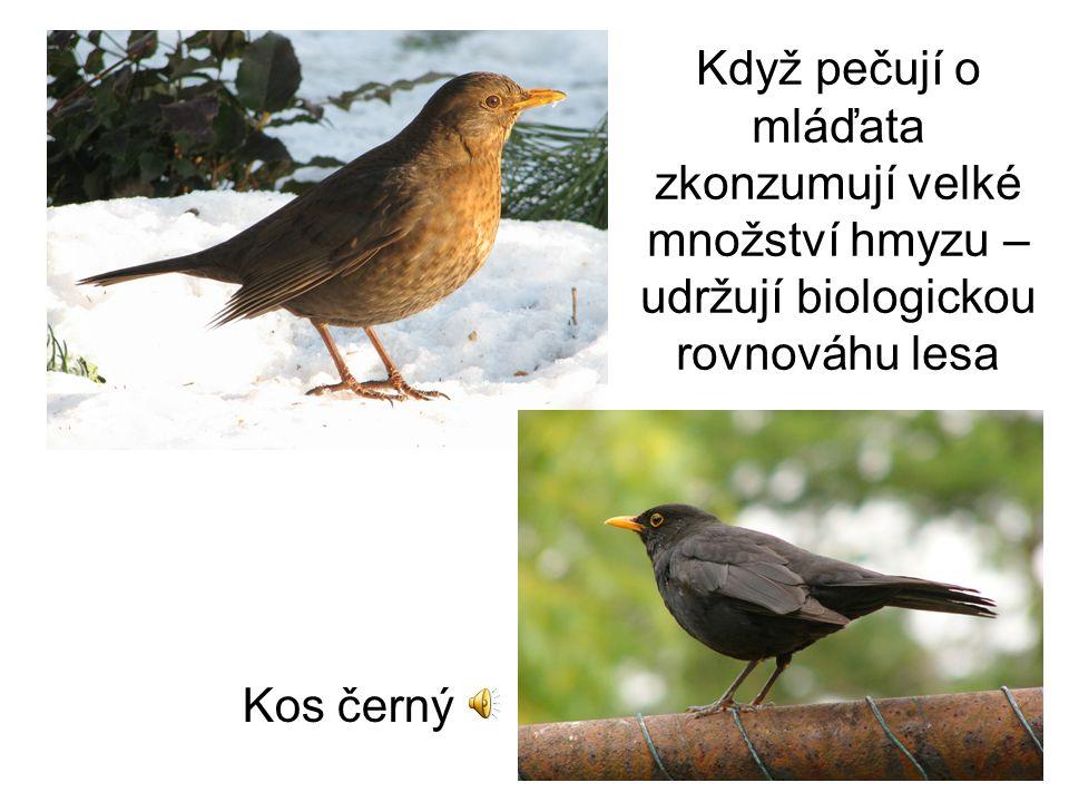 Zápis: Ptáci lesa Podkmen: obratlovci třída: ptáci řád: pěvci Svoje území s vyznačují zpěvem.