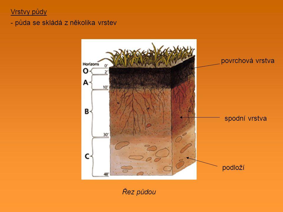 V půdě můžeme najít - zrnka písku - štěrk - drobné kamínky - zbytky těl rostlin a živočichů - vodu - vzduch Půda slouží jako opora kořenů rostlin, je zdrojem živin pro rostliny a je domovem mnoha živočichů : žížala krtek hlemýžď brouci červi