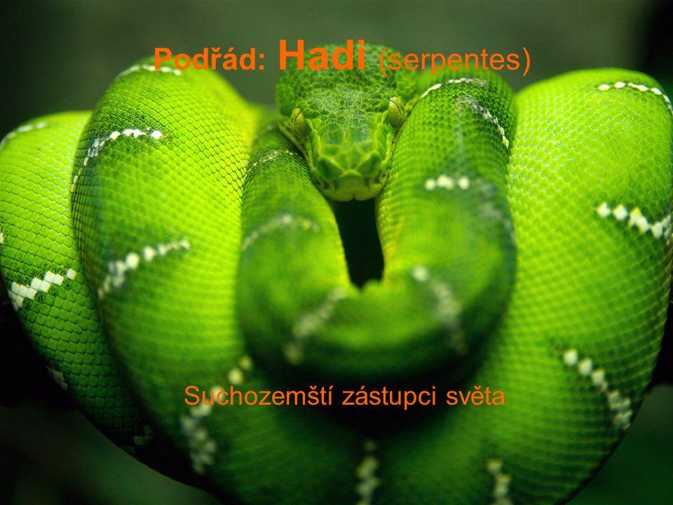 Kobra černokrká -Po celé Africe od Sahary na jih.