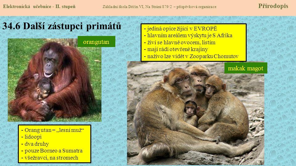34.6 Další zástupci primátů Elektronická učebnice - II.