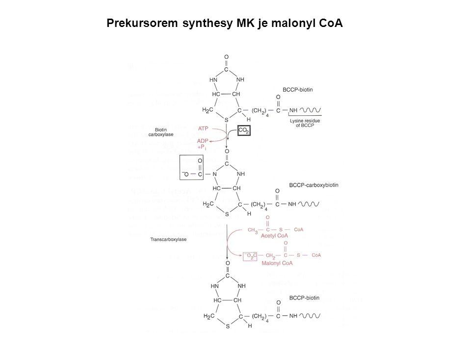 Prekursorem synthesy MK je malonyl CoA