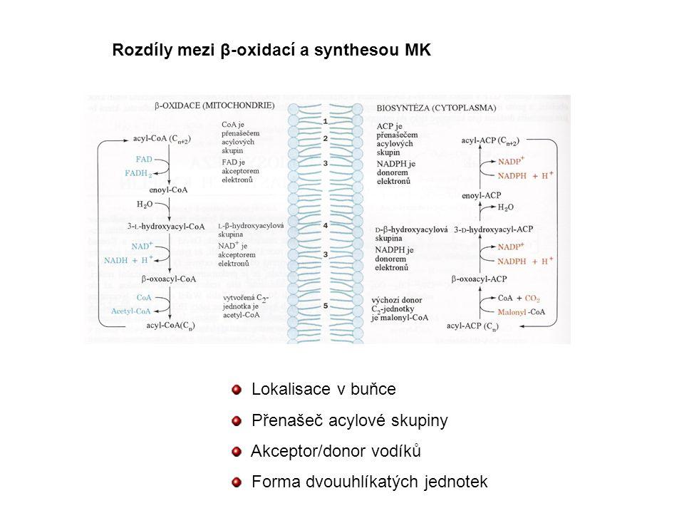 Rozdíly mezi β-oxidací a synthesou MK Lokalisace v buňce Přenašeč acylové skupiny Akceptor/donor vodíků Forma dvouuhlíkatých jednotek