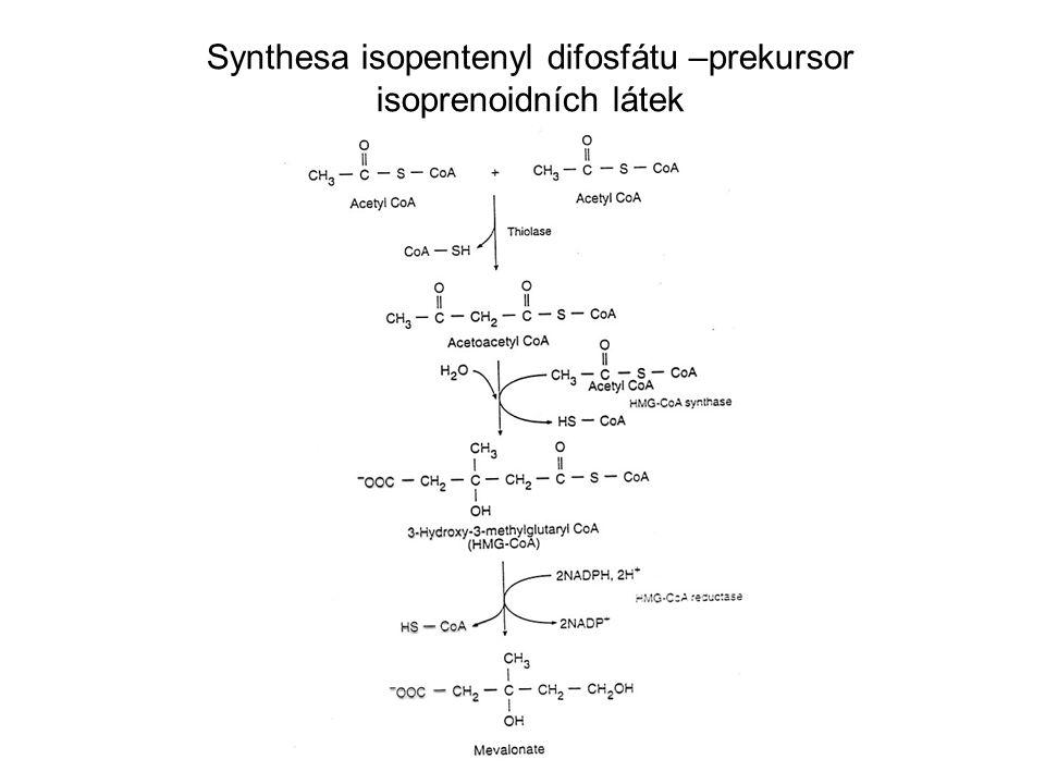 Synthesa isopentenyl difosfátu –prekursor isoprenoidních látek