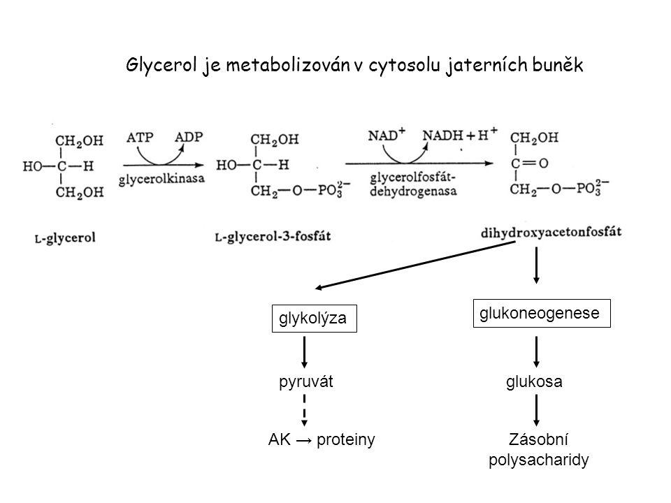 Glycerol je metabolizován v cytosolu jaterních buněk glykolýza pyruvát AK → proteiny glukoneogenese glukosa Zásobní polysacharidy