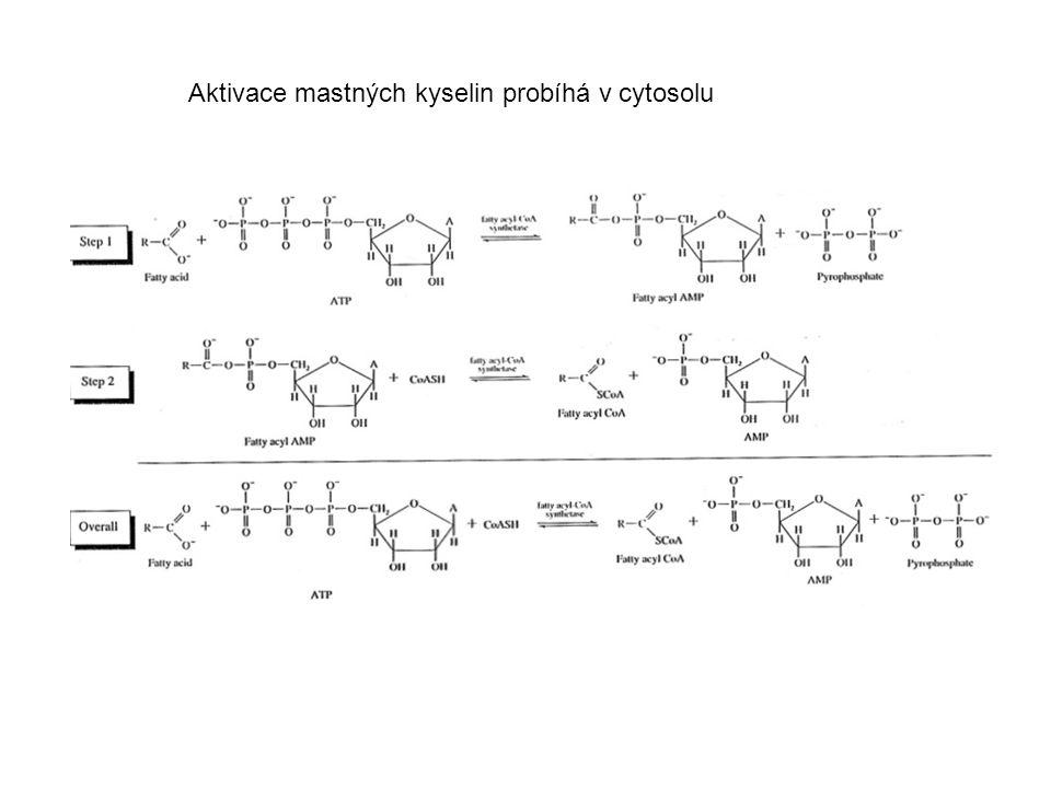 Aktivace mastných kyselin probíhá v cytosolu