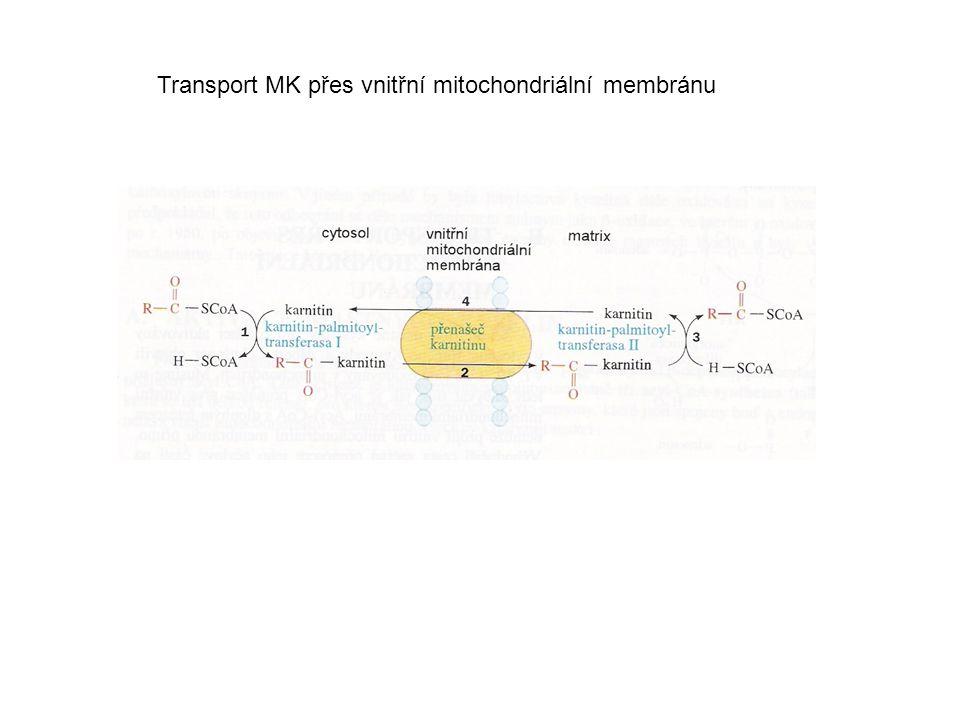 Transport MK přes vnitřní mitochondriální membránu