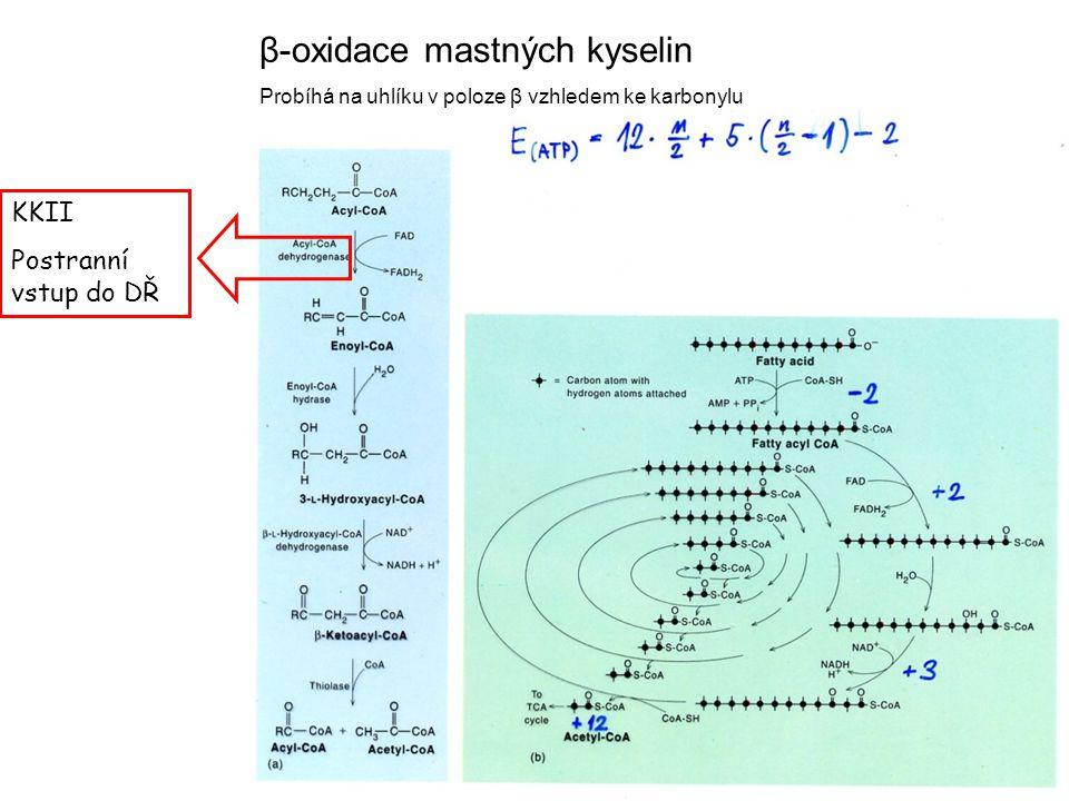 β-oxidace mastných kyselin Probíhá na uhlíku v poloze β vzhledem ke karbonylu KKII Postranní vstup do DŘ