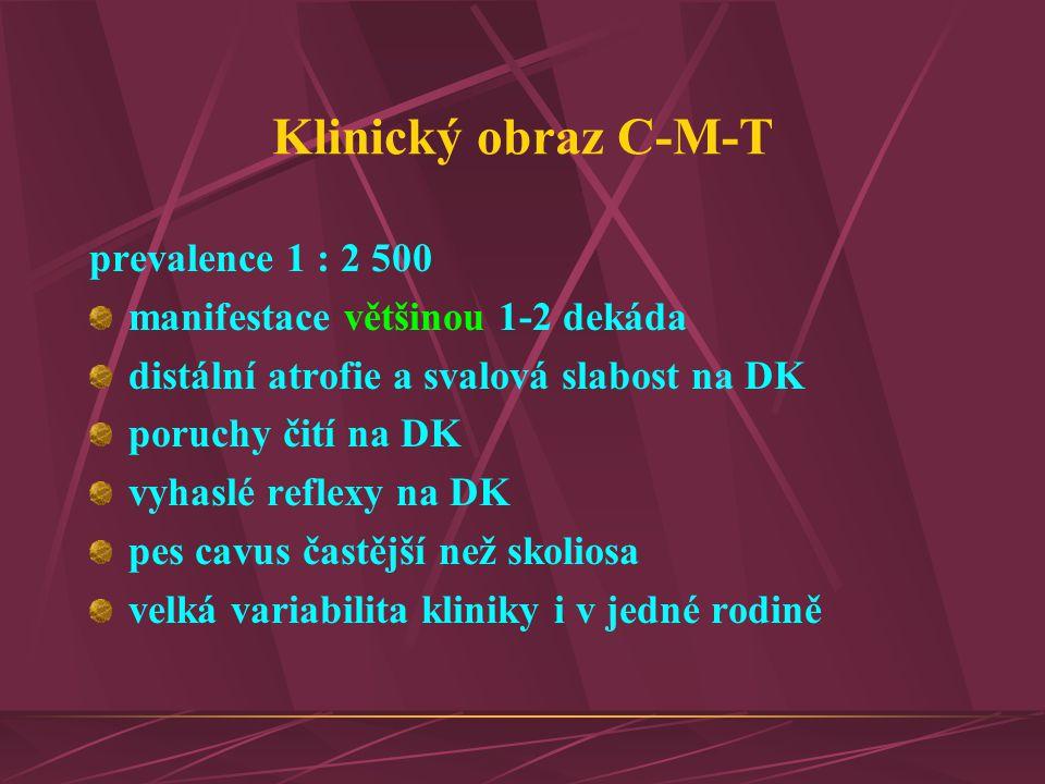 Klinický obraz C-M-T prevalence 1 : 2 500 manifestace většinou 1-2 dekáda distální atrofie a svalová slabost na DK poruchy čití na DK vyhaslé reflexy
