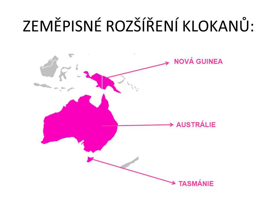 ZEMĚPISNÉ ROZŠÍŘENÍ KLOKANŮ: NOVÁ GUINEA AUSTRÁLIE TASMÁNIE