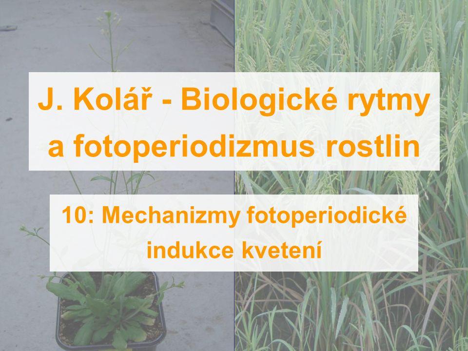 J. Kolář - Biologické rytmy a fotoperiodizmus rostlin 10: Mechanizmy fotoperiodické indukce kvetení