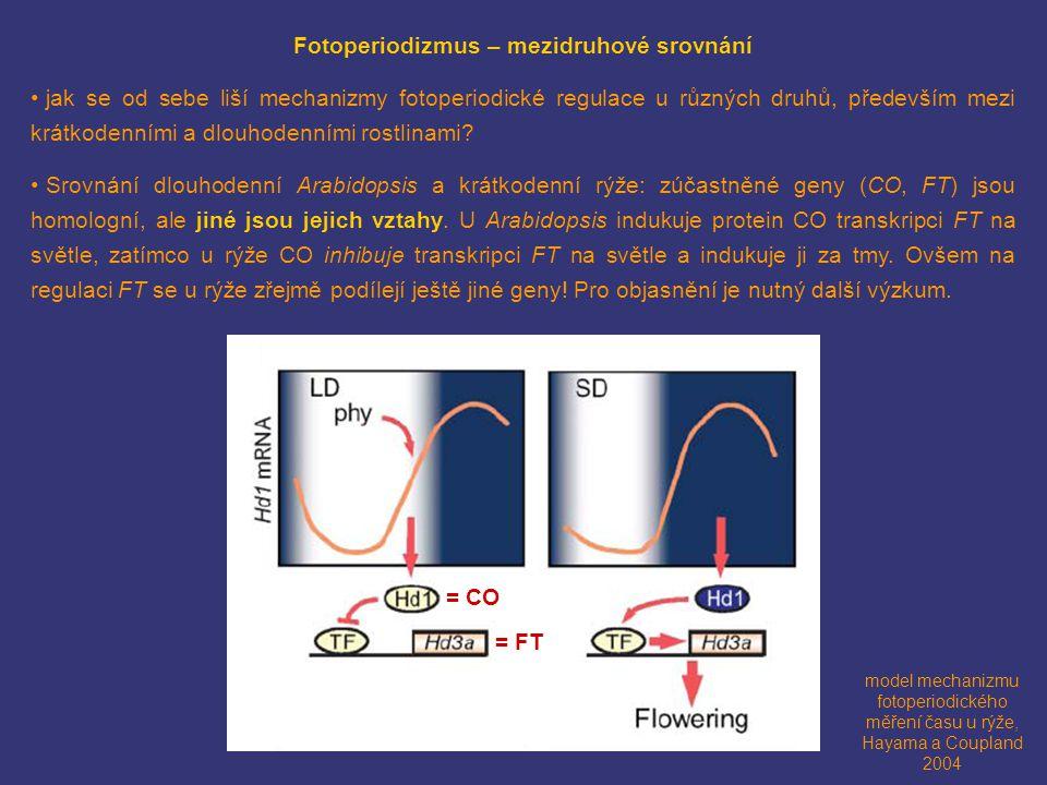 model mechanizmu fotoperiodického měření času u rýže, Hayama a Coupland 2004 = CO = FT Fotoperiodizmus – mezidruhové srovnání jak se od sebe liší mech