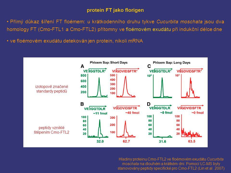 Hladiny proteinu Cmo-FTL2 ve floémovém exudátu Cucurbita moschata na dlouhém a krátkém dni. Pomocí LC-MS byly stanovovány peptidy specifické pro Cmo-F