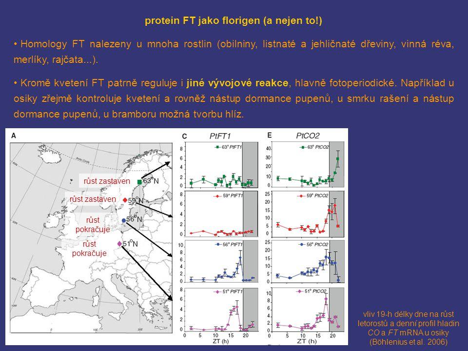 vliv 19-h délky dne na růst letorostů a denní profil hladin CO a FT mRNA u osiky (Böhlenius et al. 2006) protein FT jako florigen (a nejen to!) Homolo