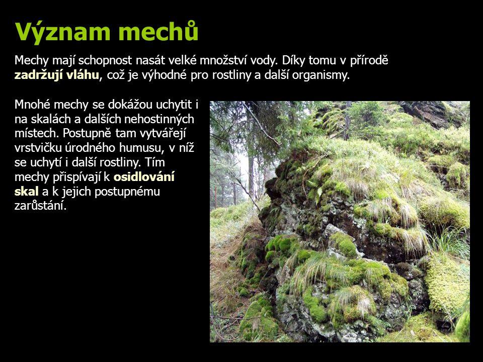 Význam mechů Mechy mají schopnost nasát velké množství vody. Díky tomu v přírodě zadržují vláhu, což je výhodné pro rostliny a další organismy. Mnohé