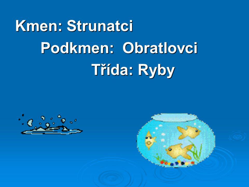 Kmen: Strunatci Podkmen: Obratlovci Podkmen: Obratlovci Třída: Ryby Třída: Ryby