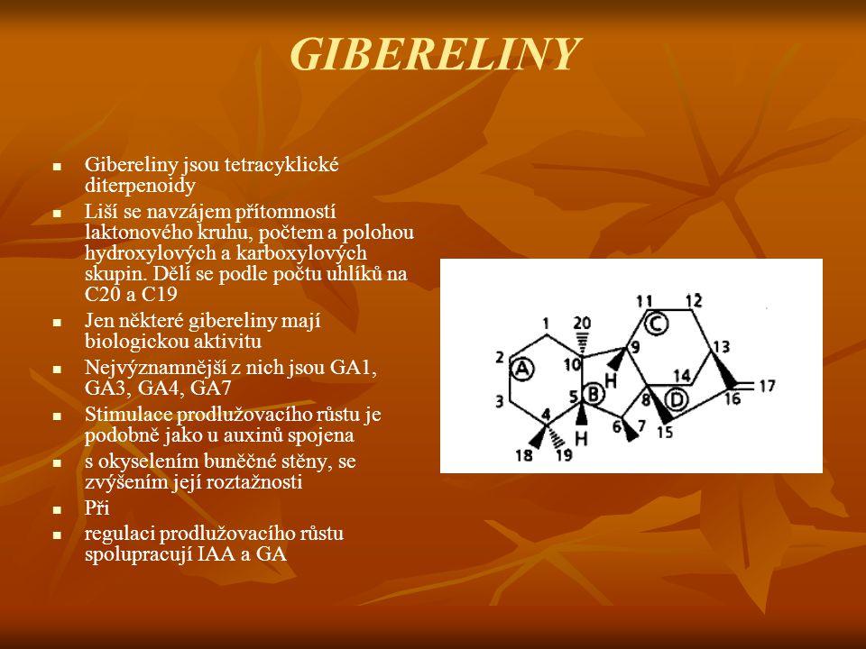 GIBERELINY Gibereliny jsou tetracyklické diterpenoidy Liší se navzájem přítomností laktonového kruhu, počtem a polohou hydroxylových a karboxylových s