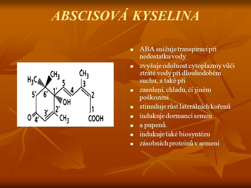 ABSCISOVÁ KYSELINA ABA snižuje transpiraci při nedostatku vody zvyšuje odolnost cytoplazmy vůči ztrátě vody při dlouhodobém suchu, a také při zasolení
