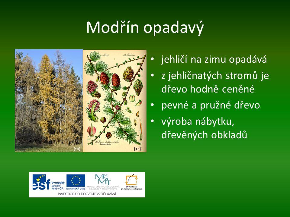 Modřín opadavý jehličí na zimu opadává z jehličnatých stromů je dřevo hodně ceněné pevné a pružné dřevo výroba nábytku, dřevěných obkladů [14][15]
