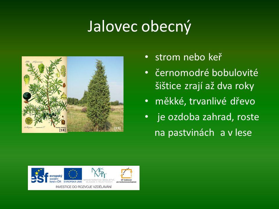 Jalovec obecný strom nebo keř černomodré bobulovité šištice zrají až dva roky měkké, trvanlivé dřevo je ozdoba zahrad, roste na pastvinách a v lese [1