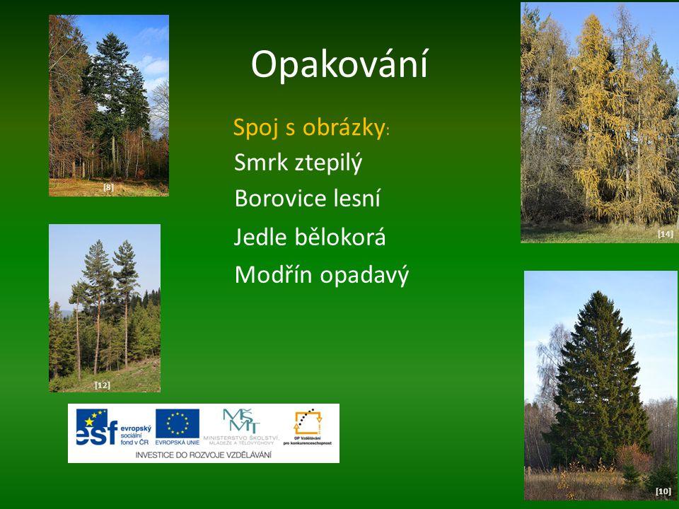 Opakování [10] [12] [8][8] [14] Spoj s obrázky : Smrk ztepilý Borovice lesní Jedle bělokorá Modřín opadavý