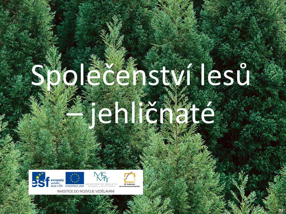 Společenství lesů – jehličnaté [1][1]