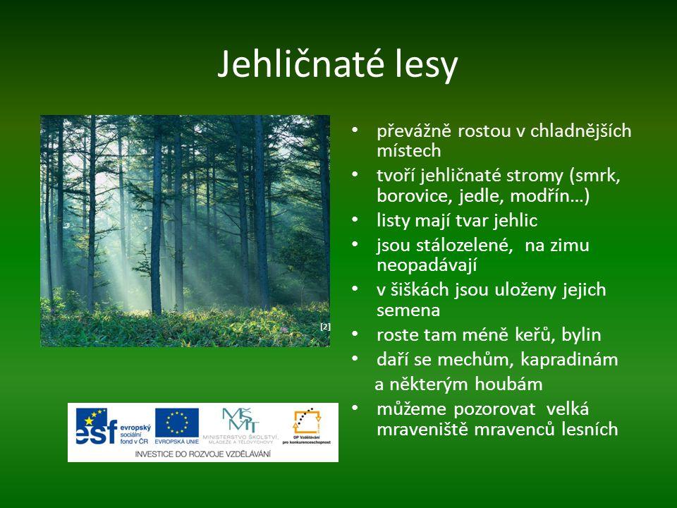 Jehličnaté lesy převážně rostou v chladnějších místech tvoří jehličnaté stromy (smrk, borovice, jedle, modřín…) listy mají tvar jehlic jsou stálozelen