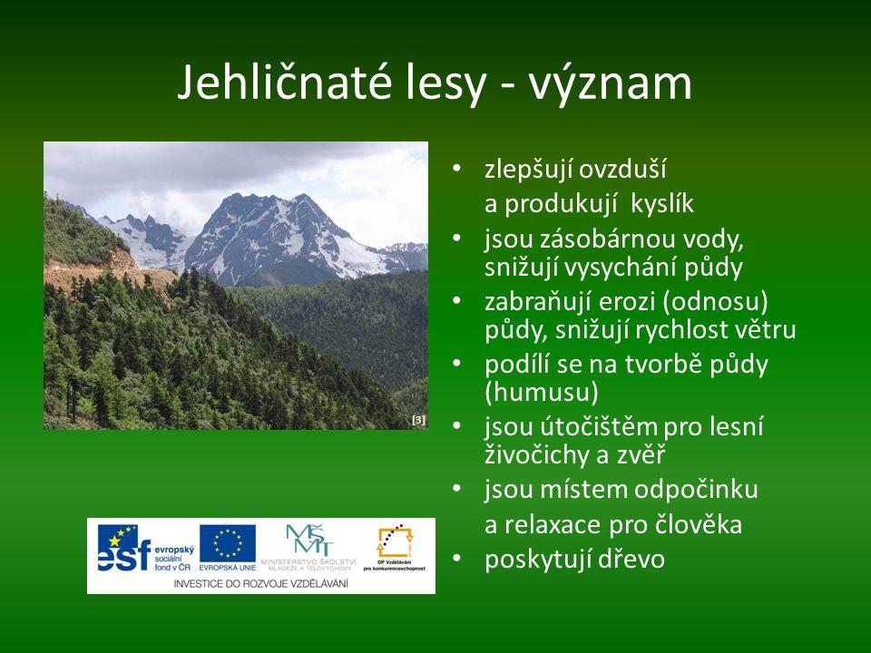 Jehličnaté lesy - význam zlepšují ovzduší a produkují kyslík jsou zásobárnou vody, snižují vysychání půdy zabraňují erozi (odnosu) půdy, snižují rychl