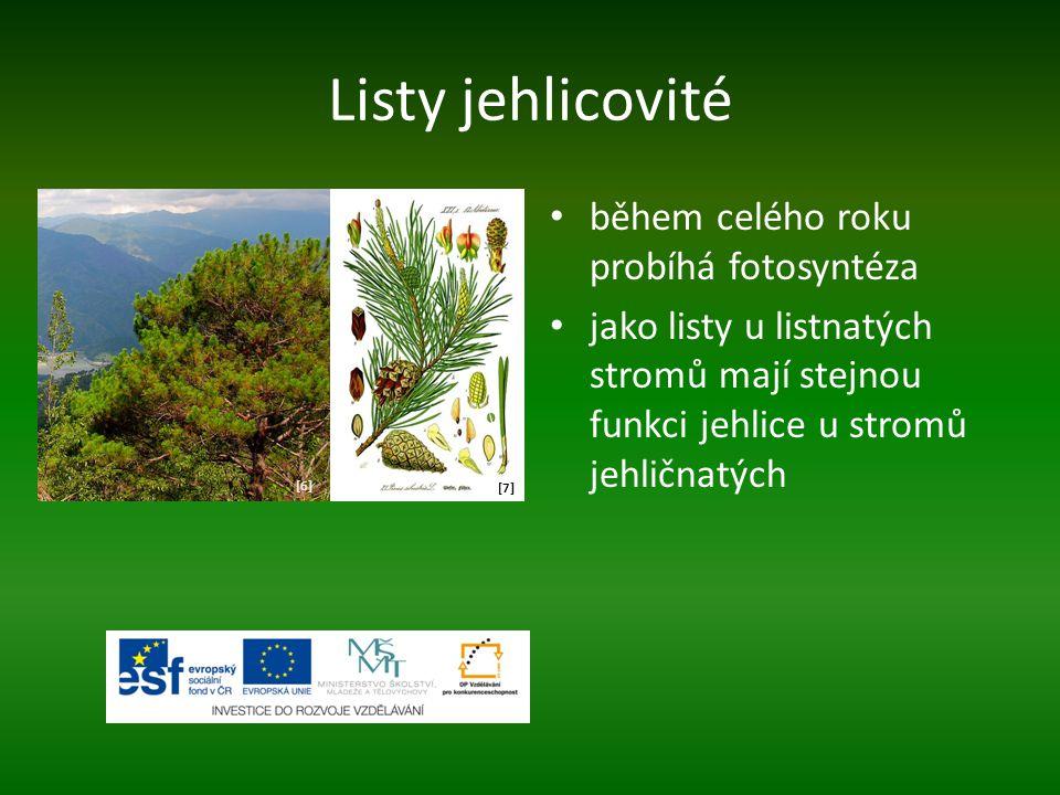 Listy jehlicovité během celého roku probíhá fotosyntéza jako listy u listnatých stromů mají stejnou funkci jehlice u stromů jehličnatých [6][6] [7][7]