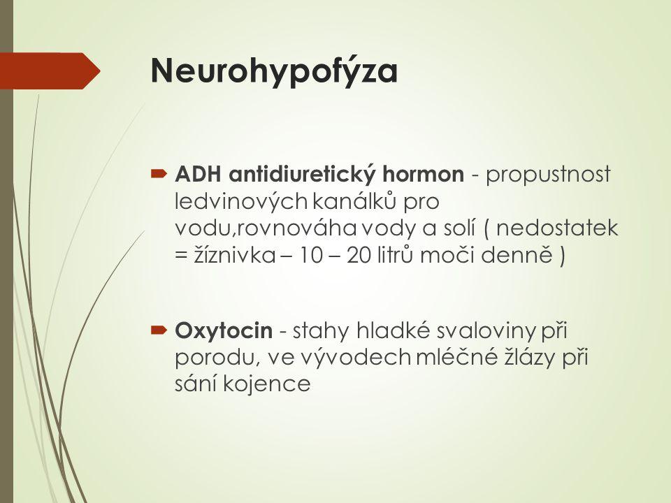 Neurohypofýza  ADH antidiuretický hormon - propustnost ledvinových kanálků pro vodu,rovnováha vody a solí ( nedostatek = žíznivka – 10 – 20 litrů moči denně )  Oxytocin - stahy hladké svaloviny při porodu, ve vývodech mléčné žlázy při sání kojence