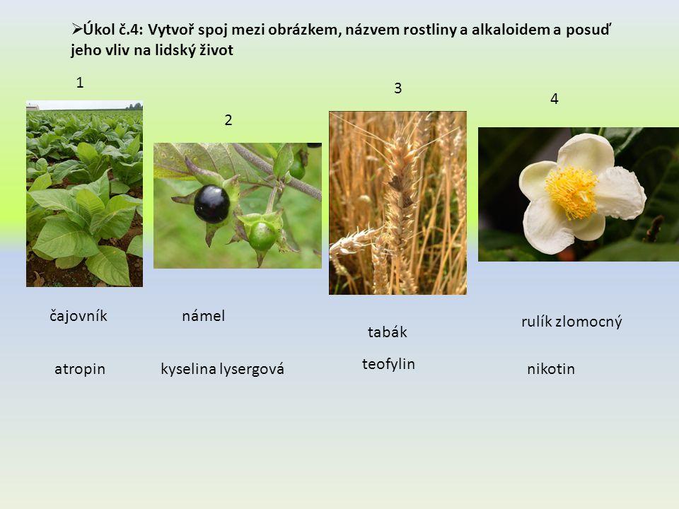  Úkol č.4: Vytvoř spoj mezi obrázkem, názvem rostliny a alkaloidem a posuď jeho vliv na lidský život čajovníknámel rulík zlomocný tabák 1 2 3 4 atropinkyselina lysergovánikotin teofylin