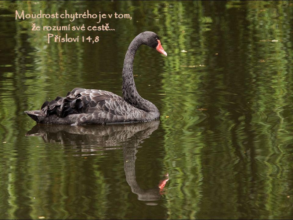 T ě sná je brána a úzká cesta, která vede k ž ivotu, a málokdo ji nalézá. Matouš 7,14