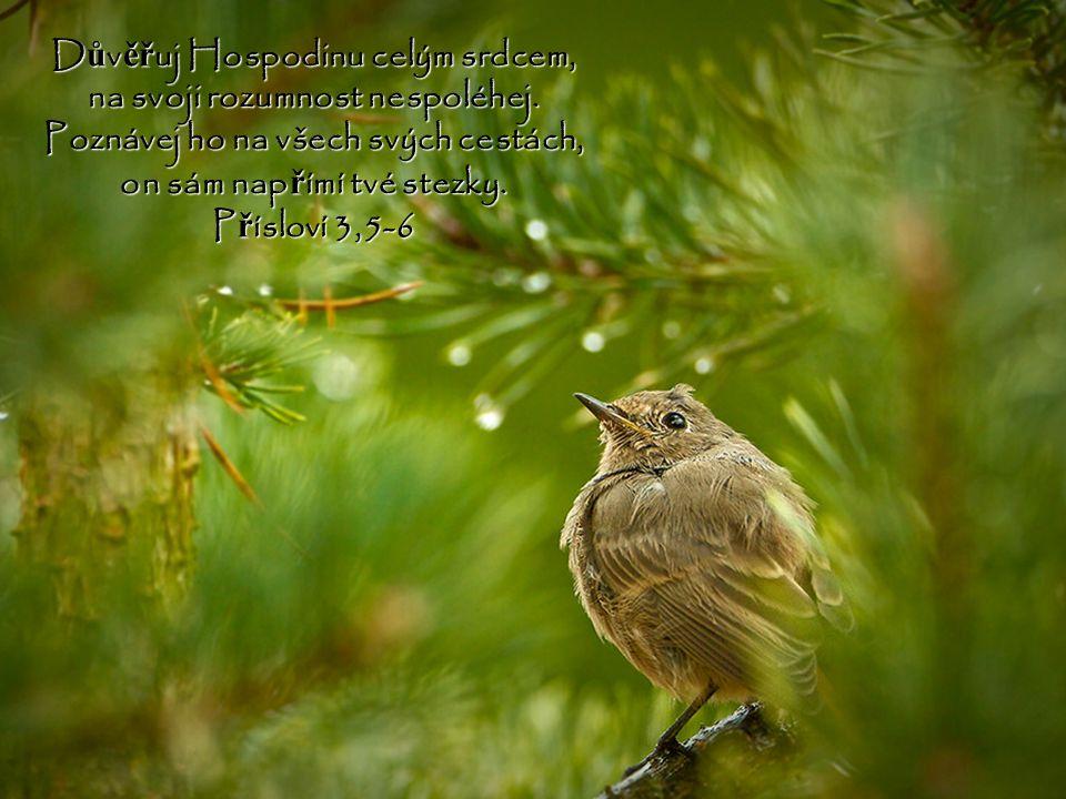 Č lov ě ku se všechny jeho cesty zdají p ř ímé, ale srdce zpytuje Hospodin. P ř ísloví 21,2