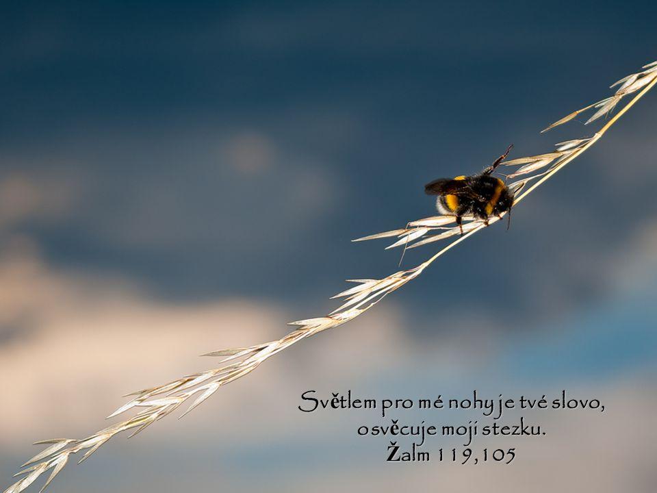 Ohlas mi zrána své milosrdenství, nebo ť doufám v tebe. Dej mi poznat cestu, po ní ž mám jít, nebo ť k tob ě pozvedám svou duši. Ž alm 143,8