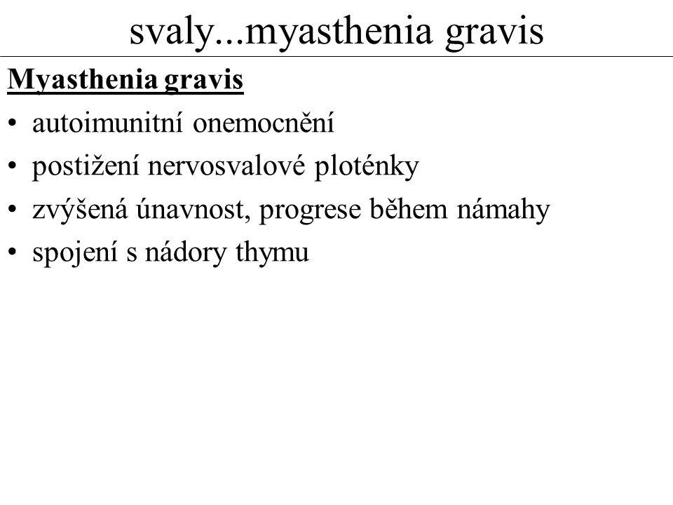 svaly...myasthenia gravis Myasthenia gravis autoimunitní onemocnění postižení nervosvalové ploténky zvýšená únavnost, progrese během námahy spojení s