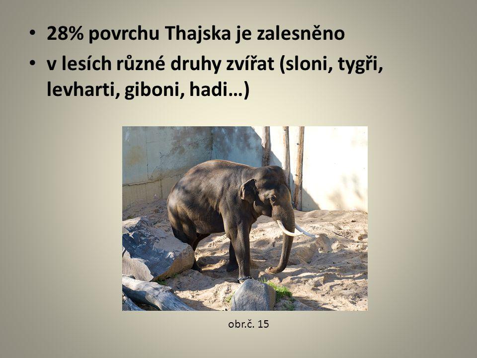 28% povrchu Thajska je zalesněno v lesích různé druhy zvířat (sloni, tygři, levharti, giboni, hadi…) obr.č. 15
